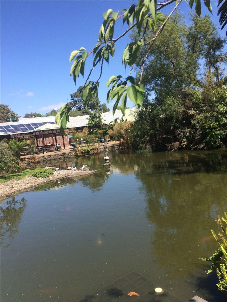 Japanese garden at Melbourne zoo
