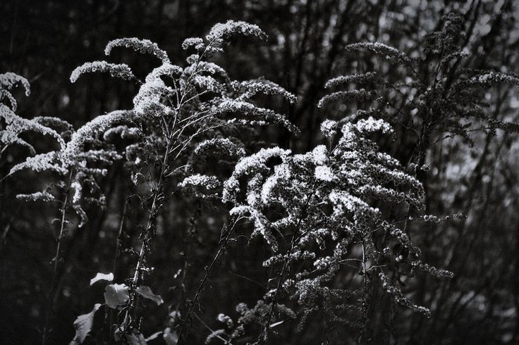 bwstock.photography  //  #forest #herbs