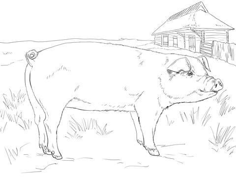 Adult Pig Coloring Page