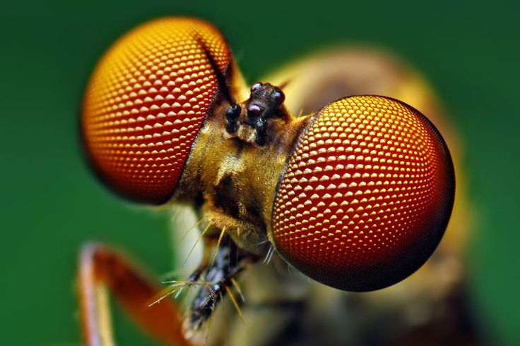 Insect eyes inspire new solar cell design by Stanford researchers