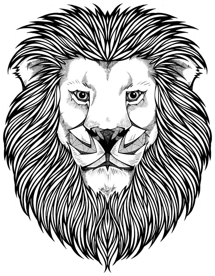 free coloring pages of lions - photo#28