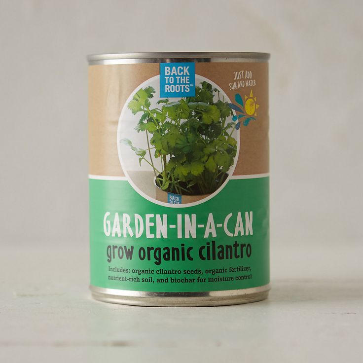 Cilantro Garden in a Can Kit in Gifts Grow Kits at Terrain 8$