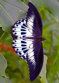ser livre,ter medo de voar o tempo passa..minhas asas estão cansada pois não senti o prazer de voar...e nen senti o sabor do vento. Viabellaitapira.com.br