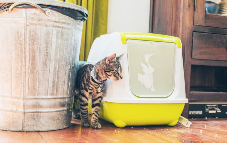 How to Keep a Zero Waste Pet Best cat litter, Flushable