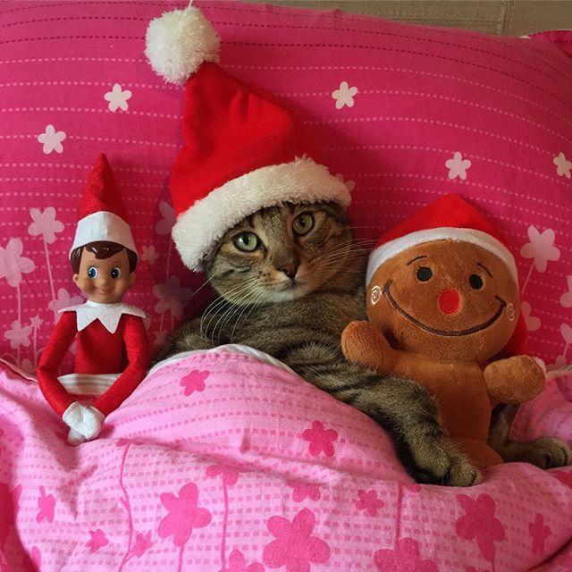 Katze verkleidet zu Weihnachten