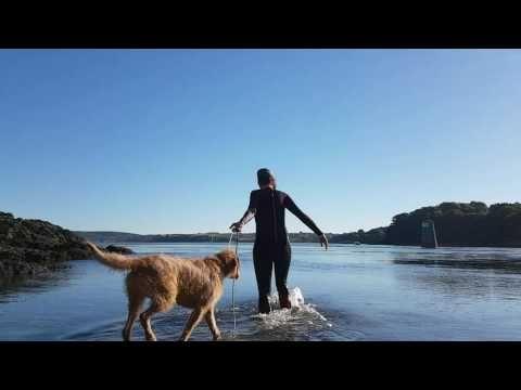 Grand Griffon Fauve de Bretagne Nageur / éducation canine / trieux YouTube