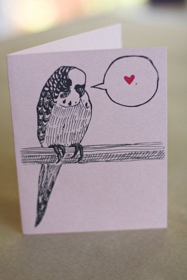 bird parakeet art draw how to budgie cards