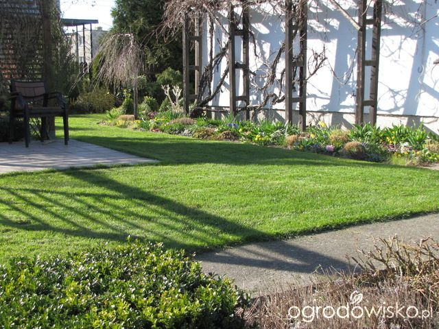 Pokażę nasz ogród - strona 316 - Forum ogrodnicze - Ogrodowisko