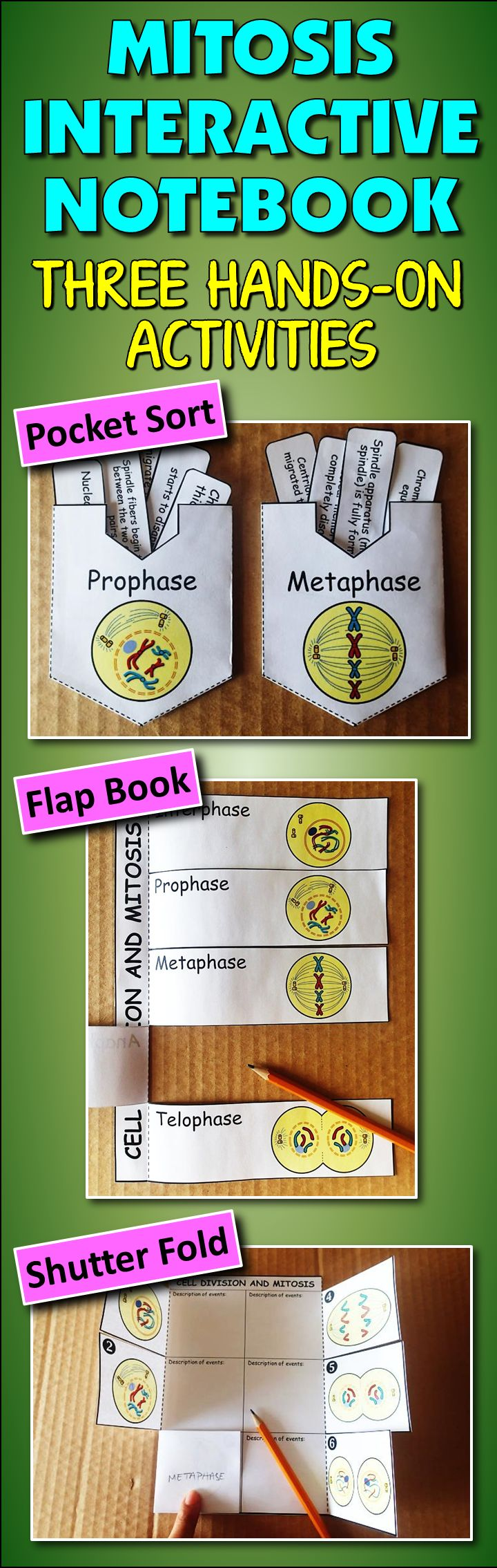 Gr.6-12. Get your students into mitosis!  Students have a fun time reinforcing their understanding of mitosis by doing these three hands on activities. By the end of these activities, students should understand mitosis inside and out.