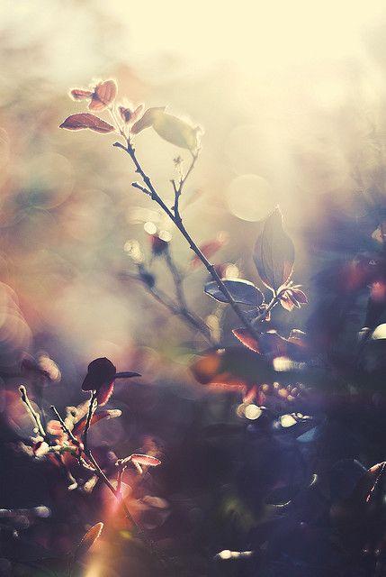 ~Autumn~ Sunday mornings