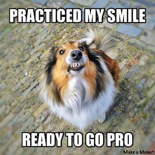 Smile! #dog #meme #sheltie #smile #creepy #teeth #marie ...
