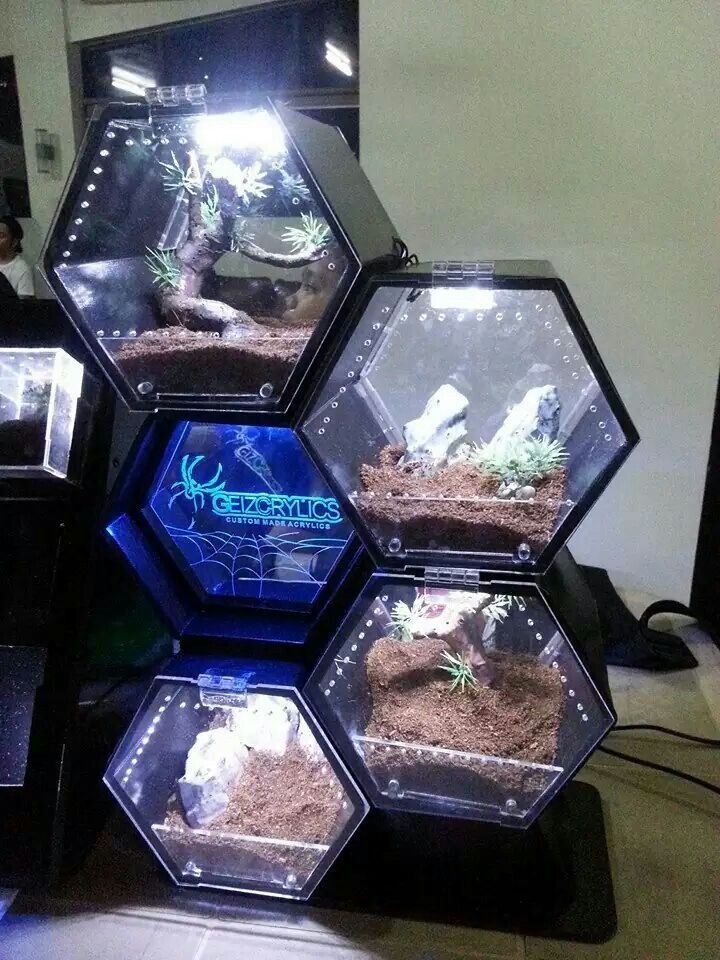 Hexagon tarantula enclosures...creepy but the containers would be cool for terrariums.
