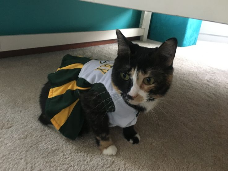 Ms. Kitty ready fur the Packer game.