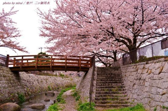 二ヶ領用水、川崎市の写真: 桜色に染まる界隈 - トリップアドバイザー メンバーが投稿した写真 (2,419 件) および二ヶ領用水の動画をチェック