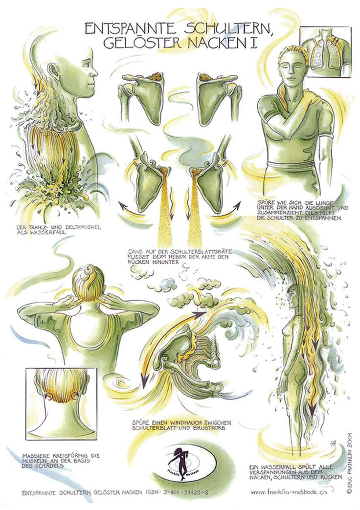 48 best Anatomie images on Pinterest | Anatomy, Physical therapy and ...