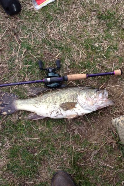 17 best images about fish bass on pinterest mouths for Good bass fishing spots near me