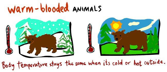 Mammals are warm-blooded. That means they can keep warm on their own.