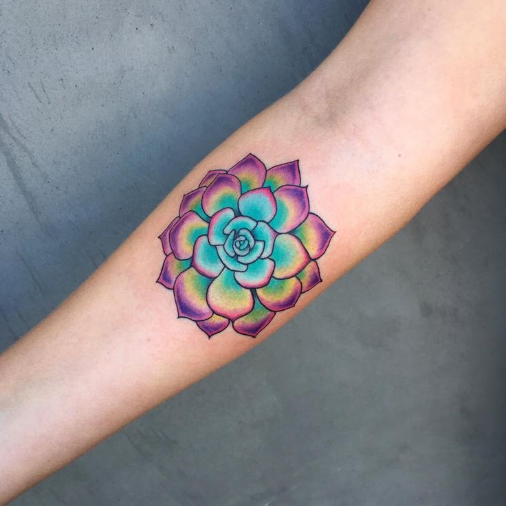 Beauitful colorful succulent tattoo by Andrea Revenant