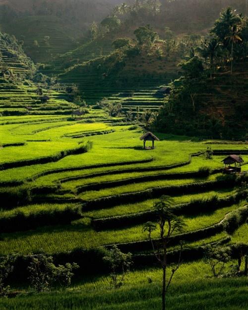 Rice Terraces and Pondoks, Bongkasa, Bali