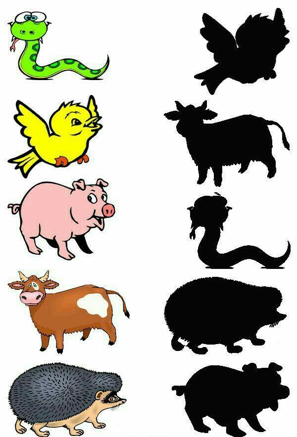 Чья тень картинки животные