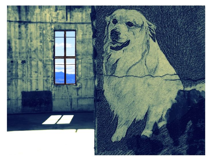 Stromlo Mountain Dogs manipulated photographs and drawings, https://www.facebook.com/KarynFearnsideArtwork