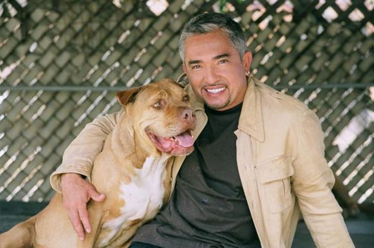 Cesar Millan: Dog training tips