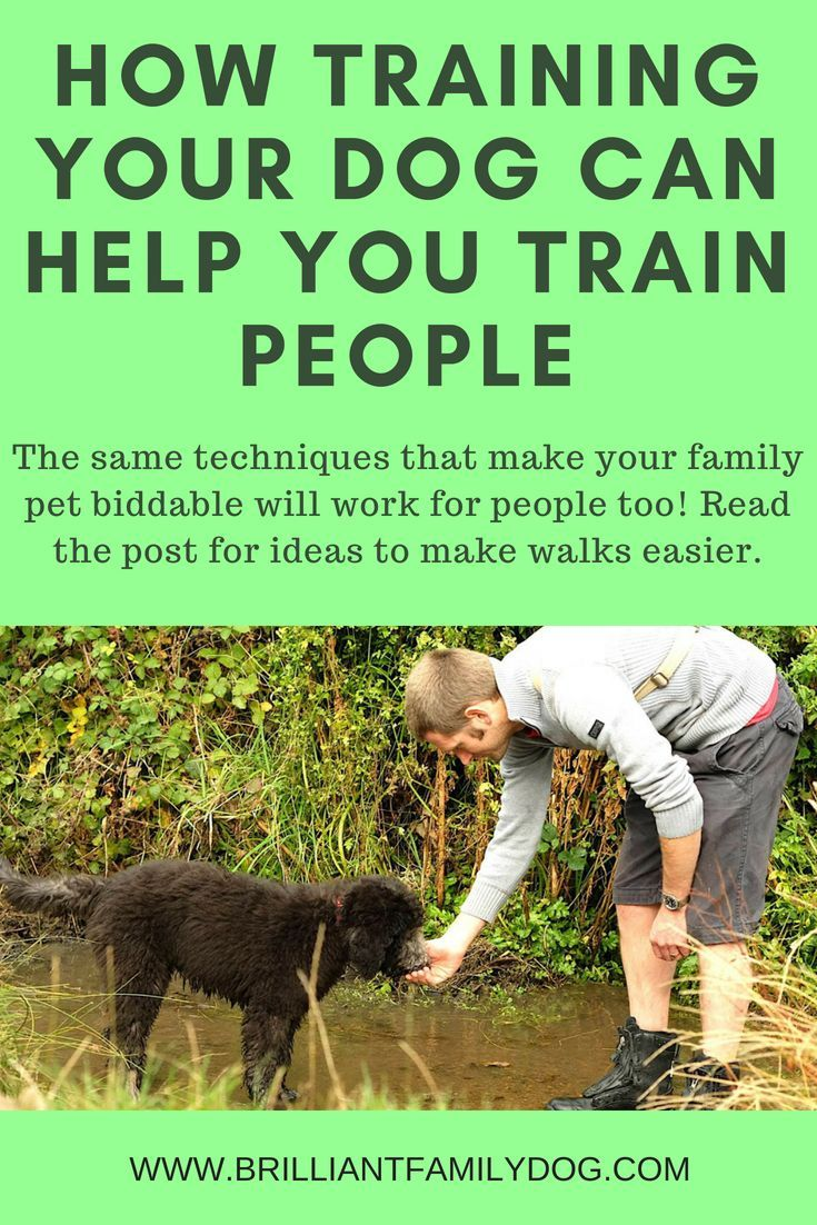 Look How Much These Dog Owners Lives Improved Training Your