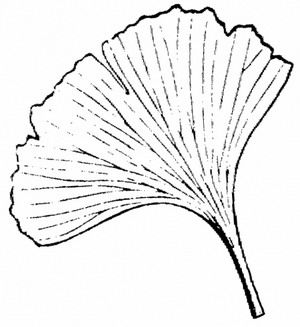 Ginkgo Leaf Rubber Stamp A Great Way For