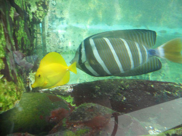 Mais peixes exóticos
