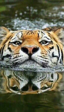 Keep my head above water!!