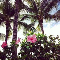 Hawks Cay Resort in Duck Key, FL