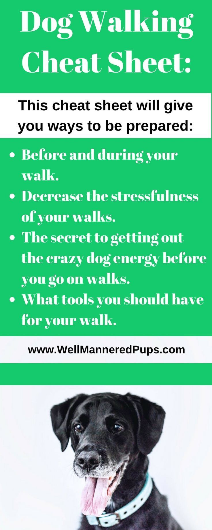 Dog Sitting Tips How To Choose A Good Dog Sitter Dog Walking