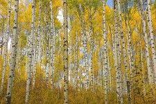 Nature Murals - Wall Murals of Nature at MagicMurals.com