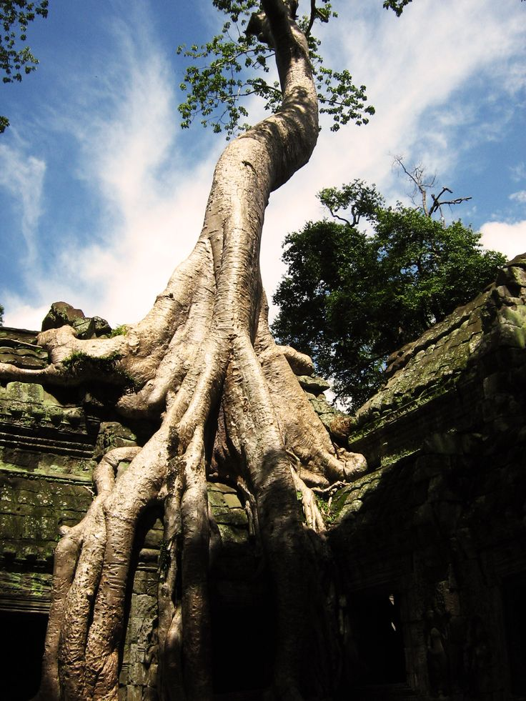 The Temples of Angkor//Cambodia