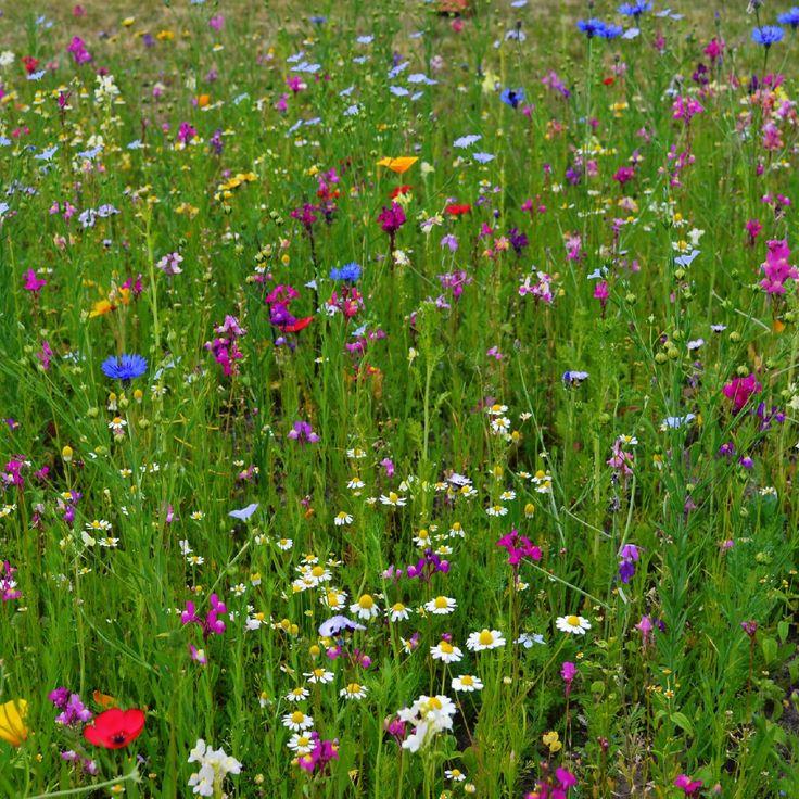 Łąka dzikich kwiatów i ziół