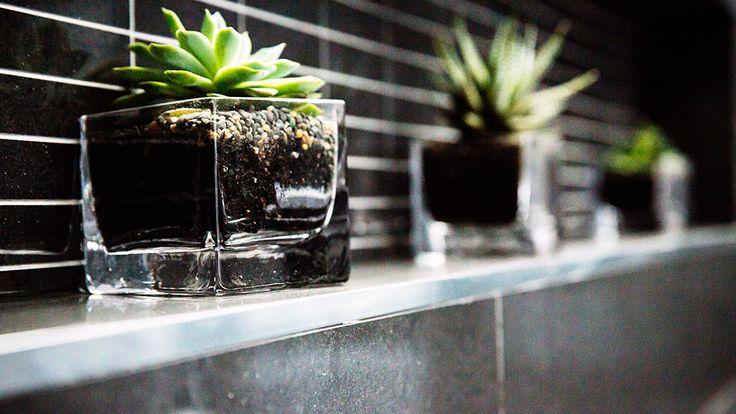The Block Glasshouse | succulents