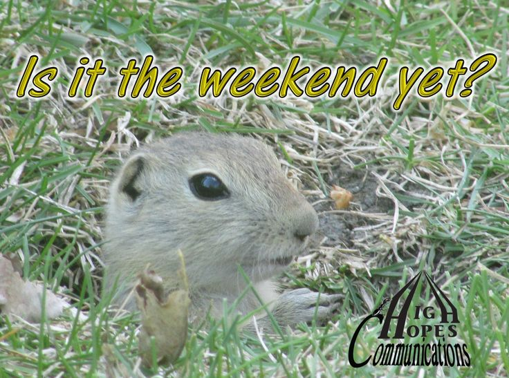 Is it the weekend yet? www.highhopescommunications.ca