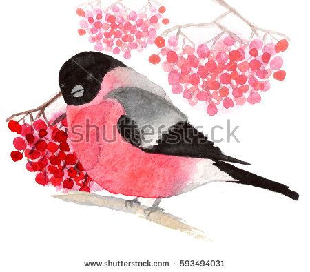 Watercolor bullfinch with bunches of rowan on white background