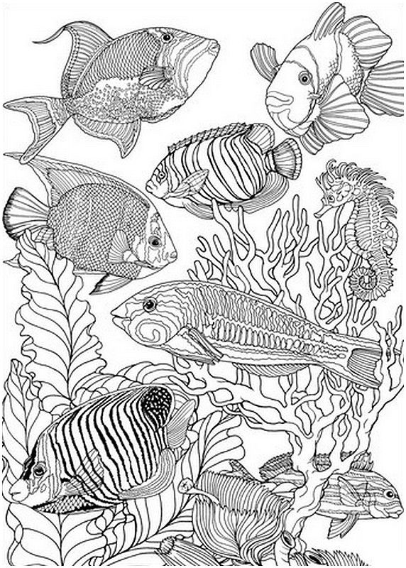 detailed sea fish to colour colouring for adults - Fish Coloring Pages For Adults