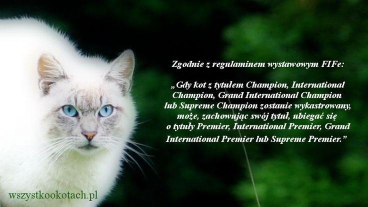 Koty wykastrowane i tytuły wystawowe FIFe