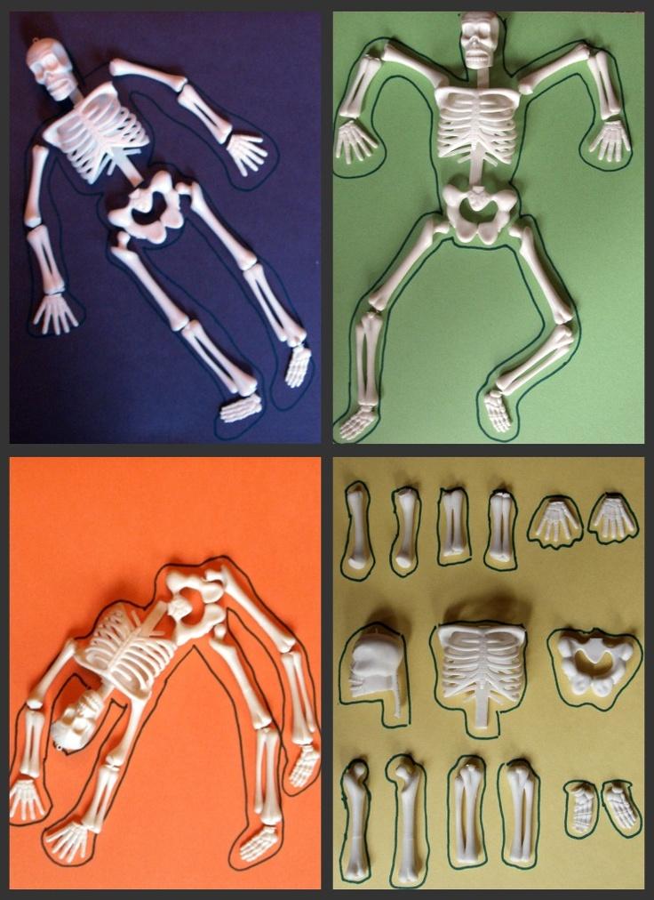 17 best skeletal images on Pinterest | Cuerpo humano, Rompecabezas y ...