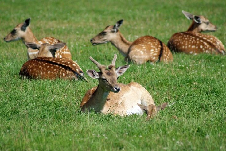 Kadzidłowo Park Dzikich Zwierząt