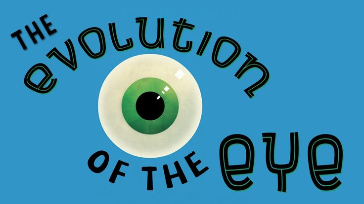 """In the TED-Ed animation """"The Evolution of the Human Eye,"""" educator Joshua Harvey explains how the human eye has changed and adapted over the course of many, many years and what's being done to impr..."""