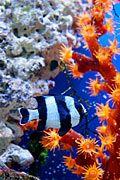 fotografie - Koraalriffen - Rode Zee