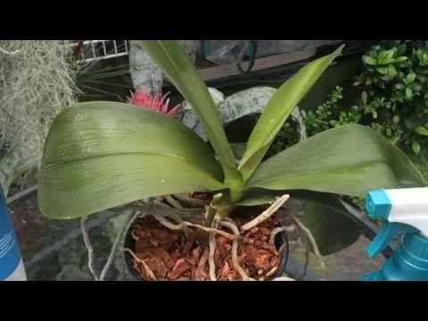 How to Repot Orchids - The Home Depot - YouTube