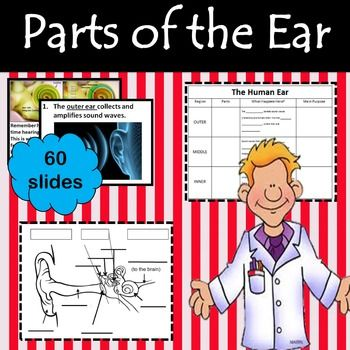 This is a Power Point on the parts and functions of the human ear.  The Power Point goes with the included graphic organizer.This graphic organizer is to take notes on the parts and functions of the human ear. The back is a blank diagram of the ear to fill in.This product, along with many other great things, is included in my Waves Bundle, check it out before purchasing this product.