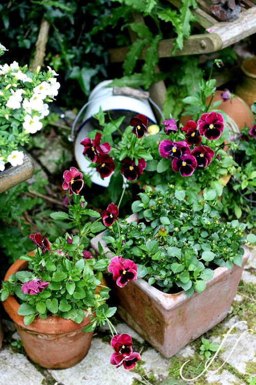 love the multiple containers with the same plant 'spilling' into each other.