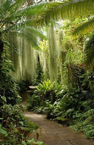Beautiful, gorgeous garden path thru a garden with Spanish Moss hanging down from the trees. This garden is probably located in the South, where the Spanish Moss is so prevalent. Love love love love LOVE!!!