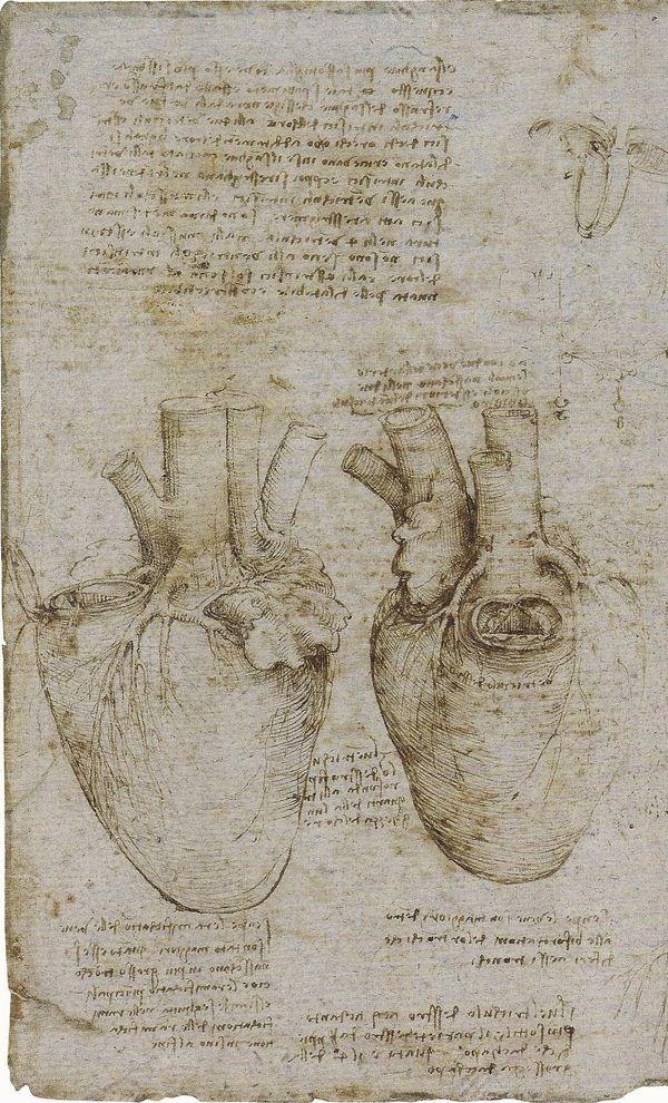 The heart and coronary vessels, 1511-13 (image from Leonardo da Vinci, Anatomist)