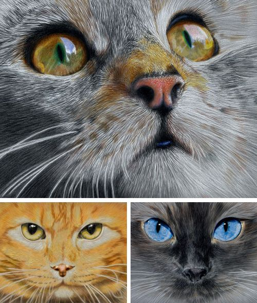Amazing Cat: 817 Best Awesome Realistic Pencil Drawings And Sketches